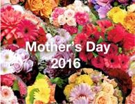 母の日2016(ボタン)